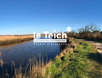 Les visiteurs d'Hiver - Agenda Nature Office de Tourisme Le Teich