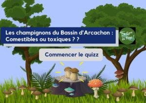 Les champignons du Bassin Arcachon