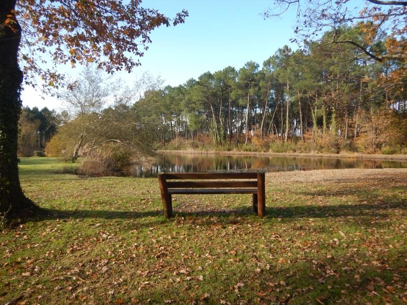 A l'orée des bois – VTT - Passez un moment sportif en solitaire, en famille ou entre amis ...entre chênes, forêt de pins et étangs, vous roulez sur des chemins sablonneux. Terrain idéal pour le VTT.