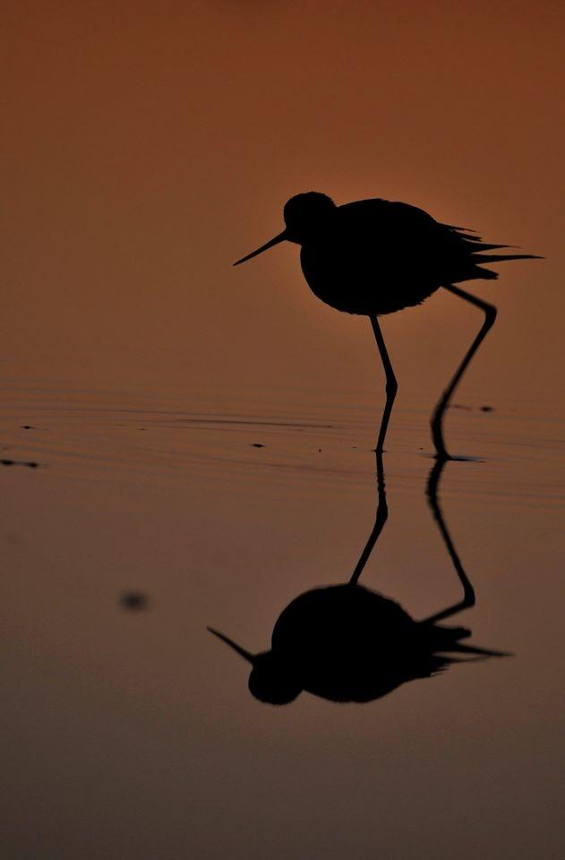 Les visiteurs du soir - Agenda Nature du Teich