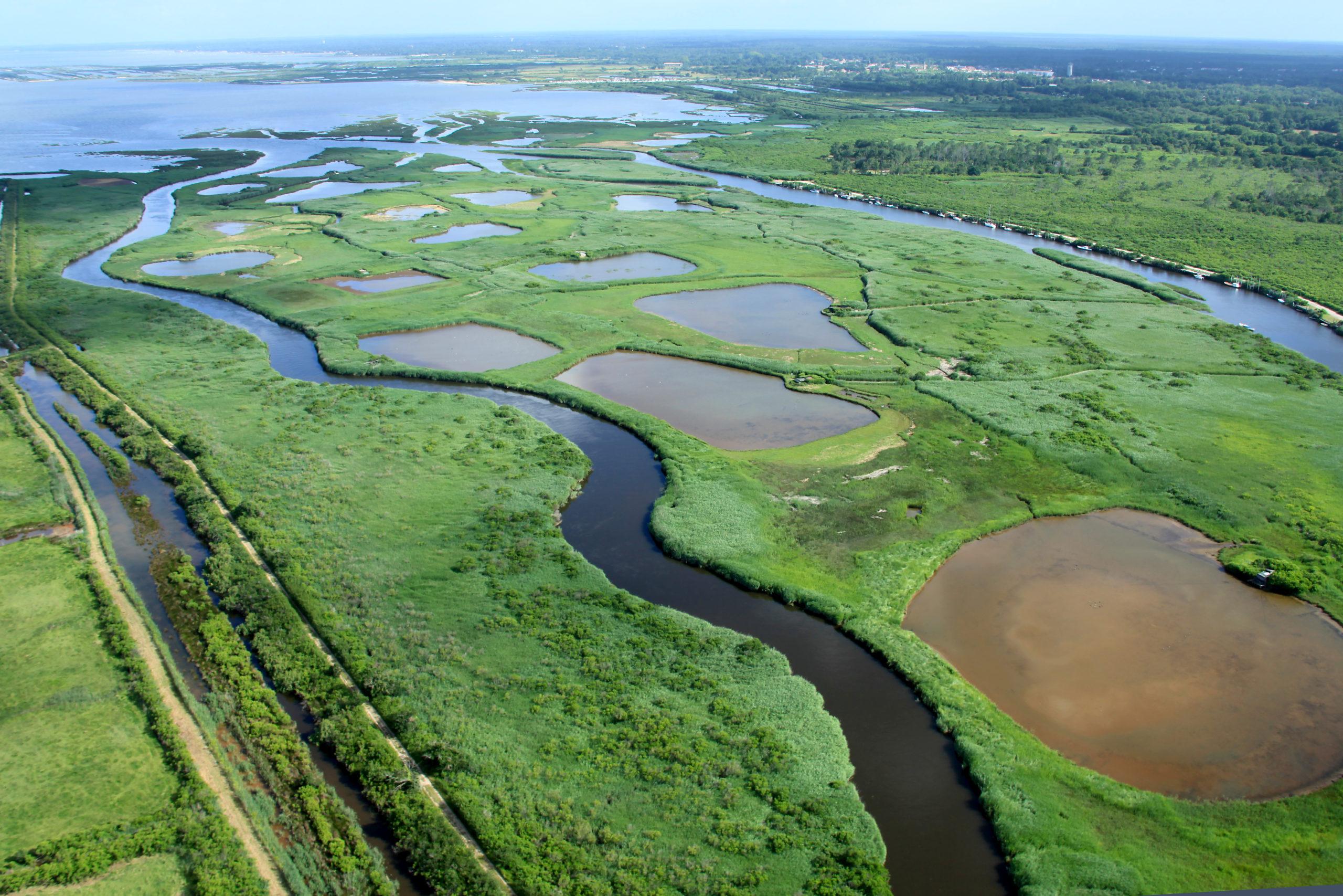 Une balade à pied dans le Delta - Agenda Nature du Teich