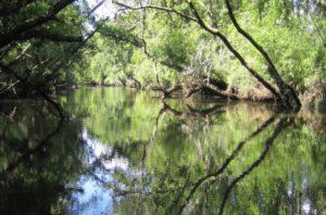 Balade découverte au bord de la Leyre - Agenda Nature Office de Tourisme Le Teich