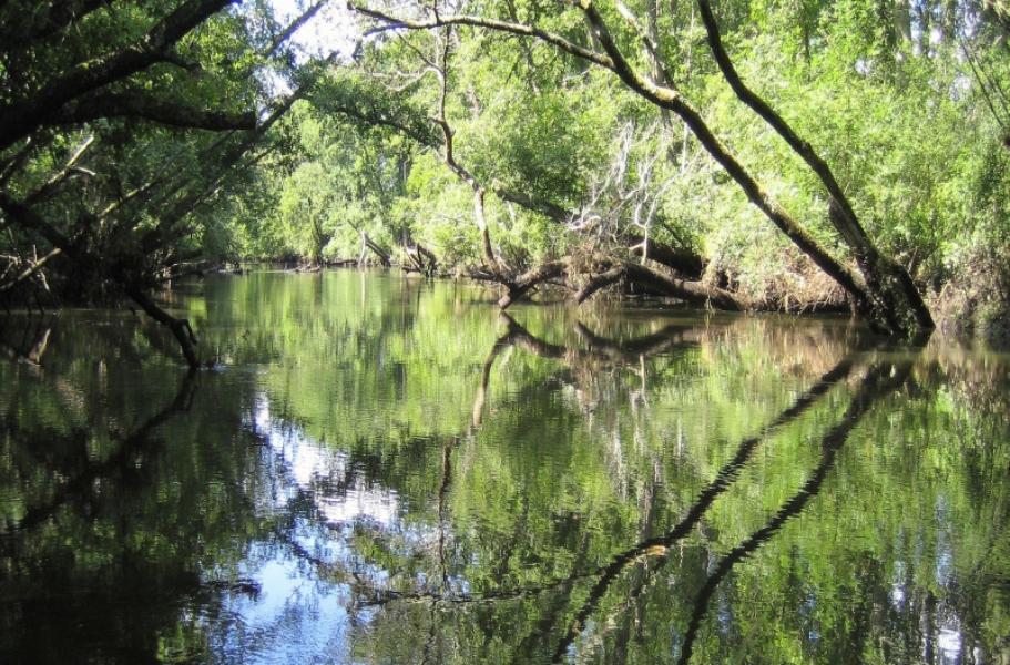 Balade découverte au bord de la Leyre - Agenda Nature du Teich