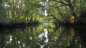 Balade découverte au bord de la Leyre : les chauves-souris - Agenda Nature Office de Tourisme Le Teich