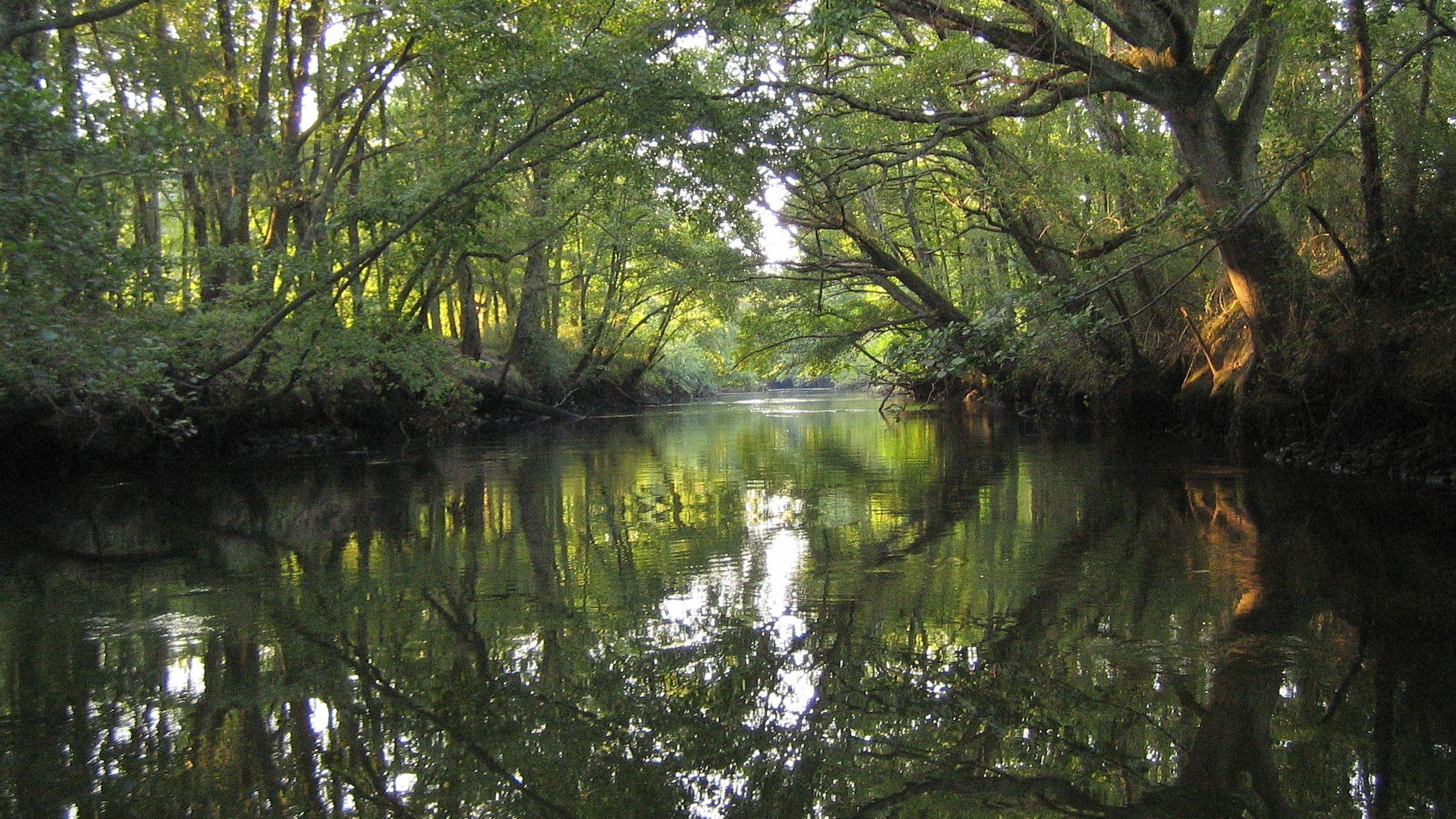 Balade découverte au bord de la Leyre : les chauves-souris - Agenda Nature du Teich