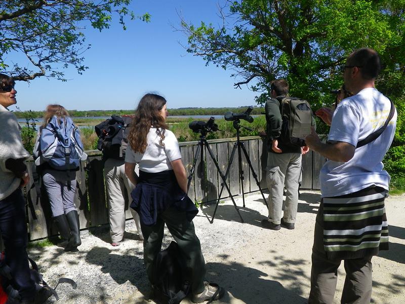 Formation à l'ornithologie de terrain : Les limicoles - Agenda Nature du Teich