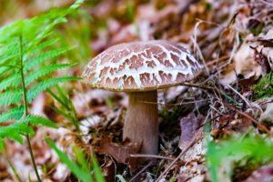 Balade découverte au bord de la Leyre : les champignons - Agenda Nature Office de Tourisme Le Teich