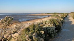 Accueil naturaliste sur le sentier du littoral à la Pointe du Teich - Agenda  Office de Tourisme Le Teich