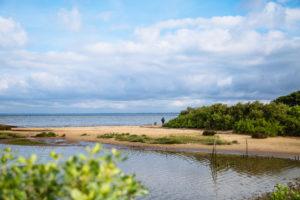 Les trésors de la pointe - Agenda Nature Office de Tourisme Le Teich