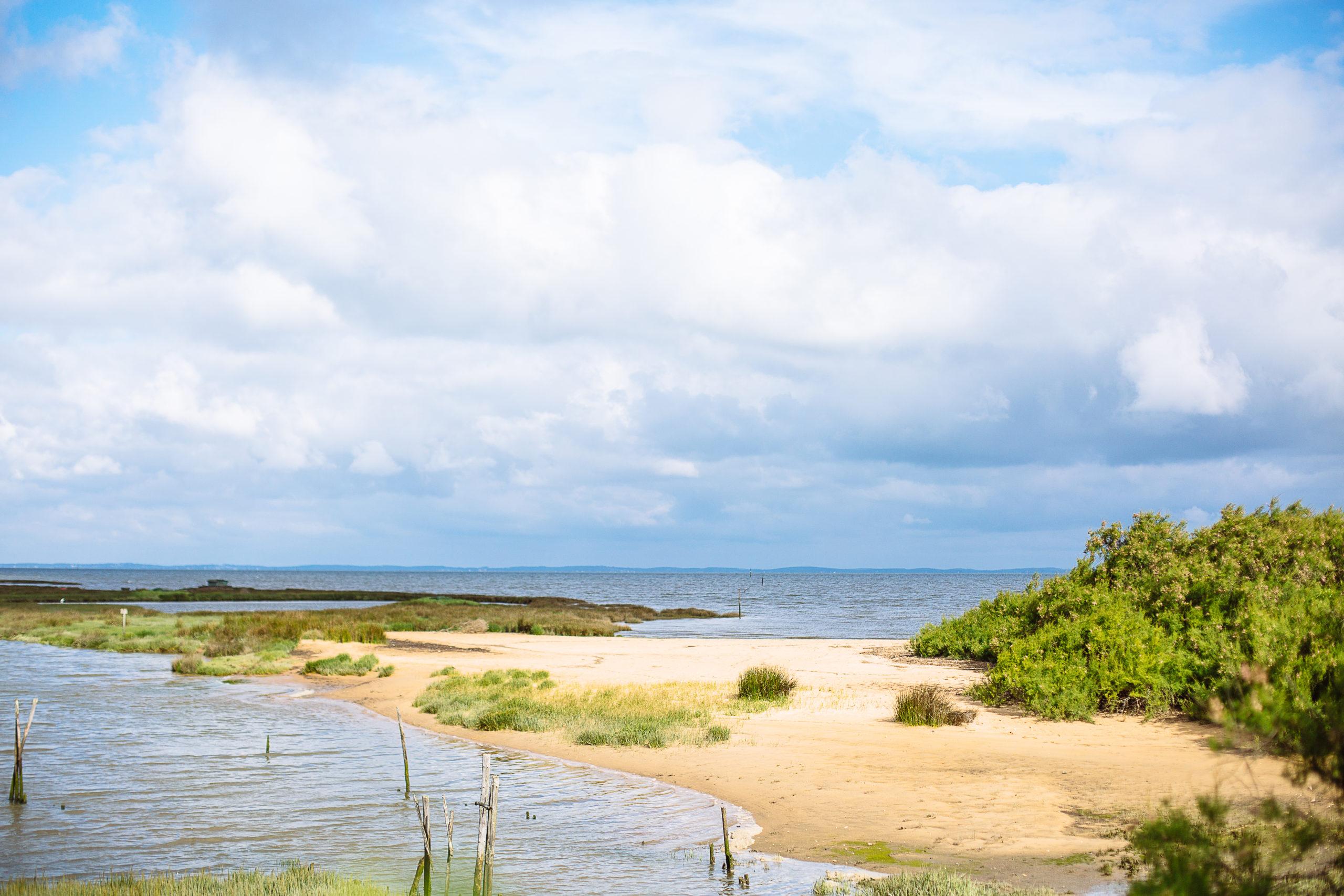 Les balades nature de Béa - Agenda Nature du Teich