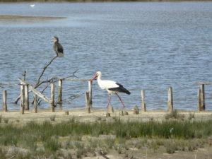 Week-end initiation à l'ornithologie de terrain : reproduction et oiseaux chanteurs - Agenda Nature Office de Tourisme Le Teich