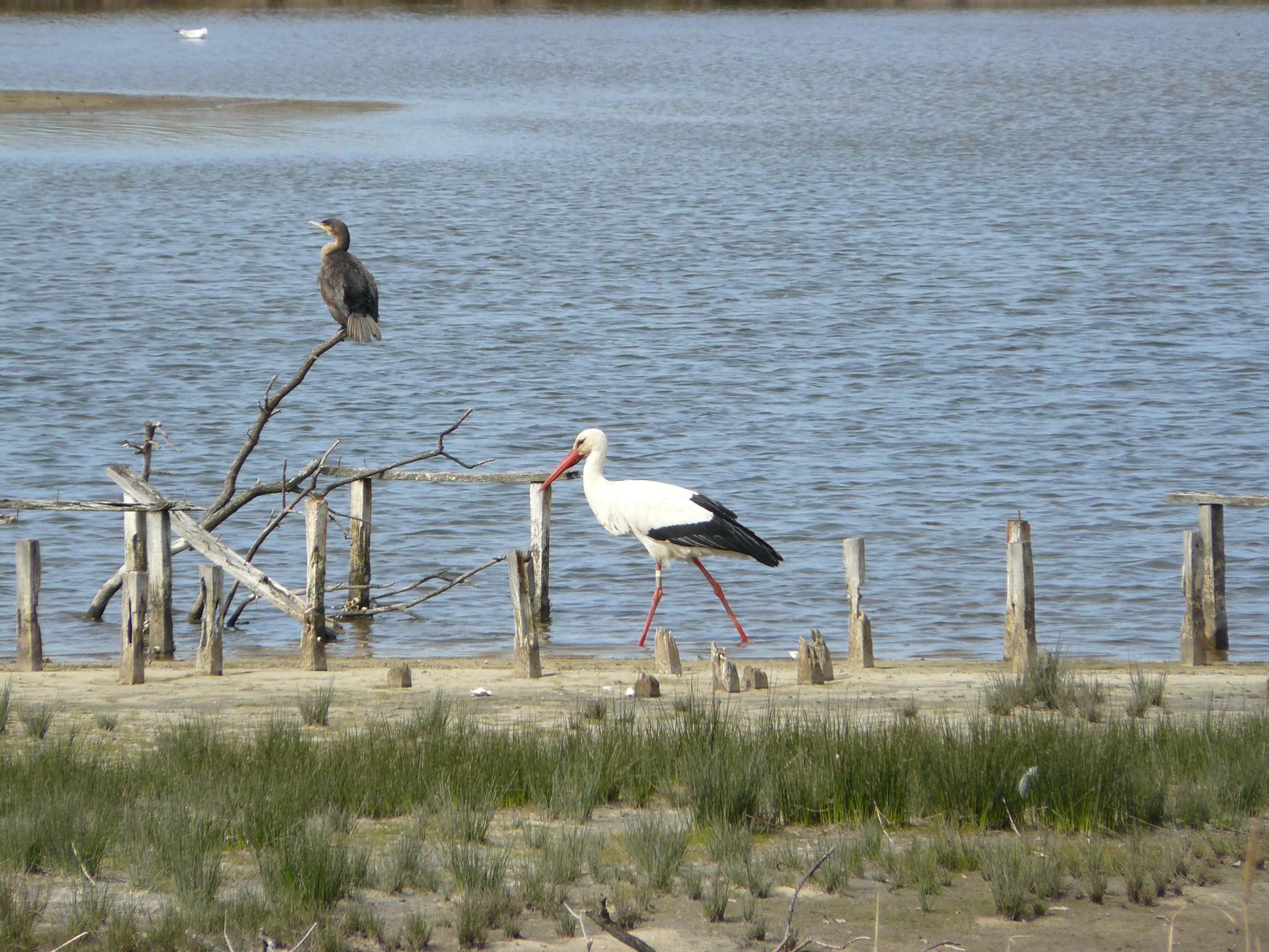 Les visiteurs d'Automne - Agenda Nature du Teich