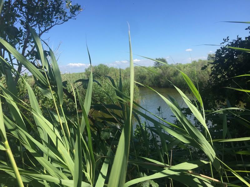 Accueil naturaliste sur le Domaine de Fleury - Agenda Nature du Teich