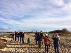 Formation aux oiseaux du littoral : l'hivernage des oiseaux - Agenda Nature Office de Tourisme Le Teich