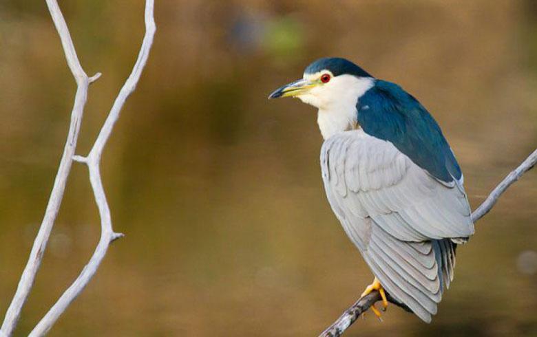 Réserve Ornithologique du Teich • Entre potes