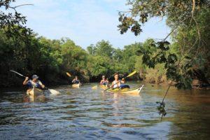 Sortie en kayak de mer – Découverte du delta de l'Eyre - Agenda Sports et loisirs Office de Tourisme Le Teich