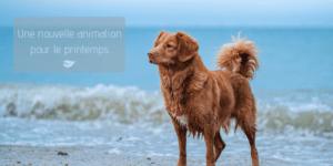 Balades canines - Agenda Nature Office de Tourisme Le Teich