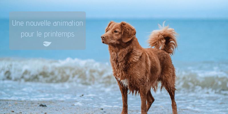 Balades canines - Agenda Nature du Teich